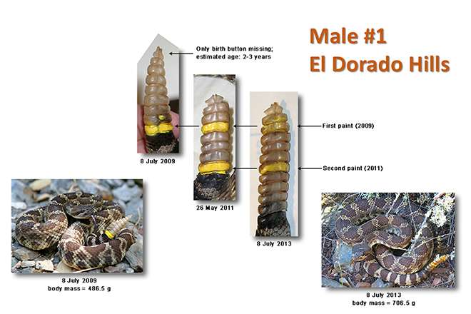 Here is a PowerPoint slide of Male 01